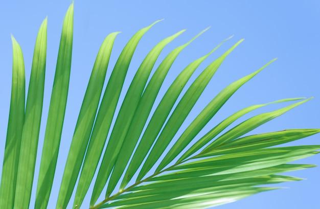 Feuilles de palmier Photo Premium