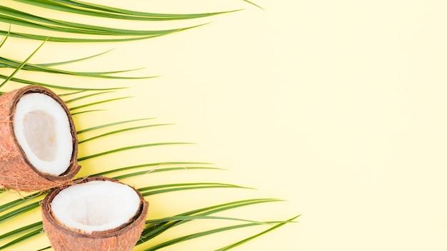 Feuilles de plantes vertes fraîches et noix de coco Photo gratuit
