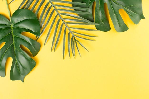 Feuilles de plantes vertes Photo gratuit