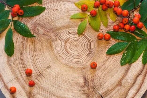 Les feuilles de rowan et les baies sur une scie ronde coupaient le mélèze. Photo Premium
