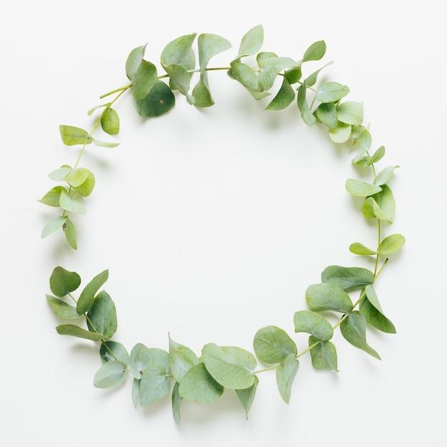 Les feuilles se tordent sur fond blanc Photo gratuit