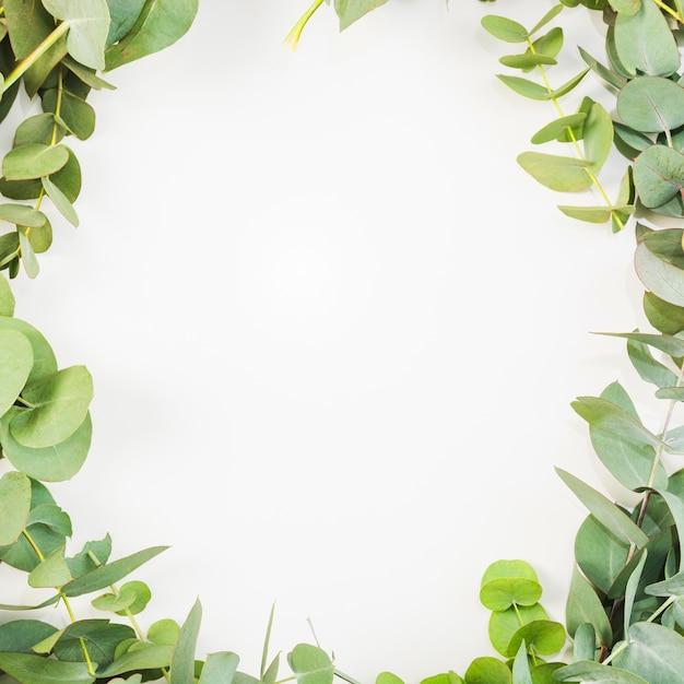 Les feuilles sont disposées comme cadre sur fond blanc Photo gratuit