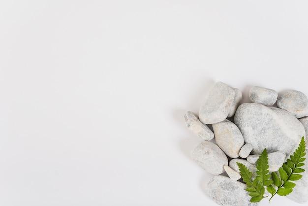 Feuilles sur tas de pierres Photo gratuit