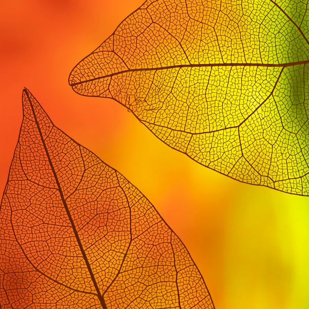 Feuilles transparentes avec orange et jaune Photo gratuit