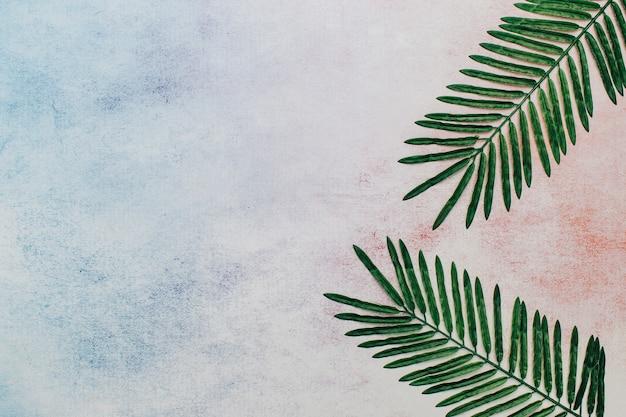 Feuilles tropicales avec espace de copie à gauche. Photo gratuit