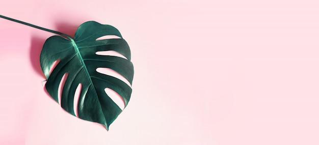 Feuilles Tropicales Monstera Sur Fond Rose. Photo gratuit