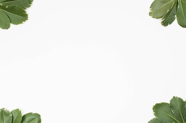 Feuilles vertes au coin du fond blanc Photo gratuit