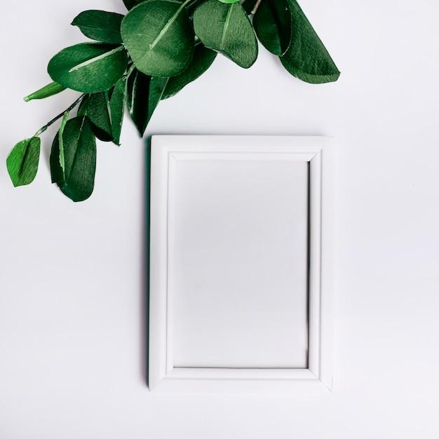 Feuilles vertes sur un cadre vide sur fond blanc Photo gratuit