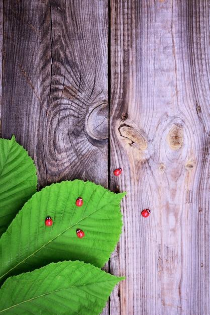 Feuilles vertes de châtaignier sur une surface en bois grise Photo Premium