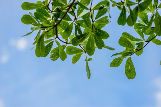 Feuilles vertes contre le ciel Photo Premium