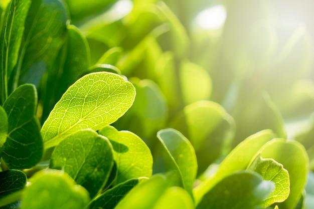 Feuilles vertes dans le jardin pendant les chauds mois d'été avec le soleil. Photo Premium