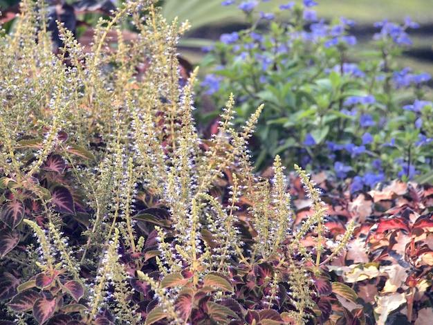 Feuilles vertes dans le jardin Photo Premium