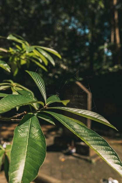 Feuilles Vertes Dans La Jungle Thaïlandaise Photo Premium