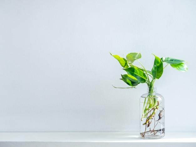 Feuilles Vertes Avec De L'eau Dans Une Bouteille En Plastique Transparente. Photo Premium