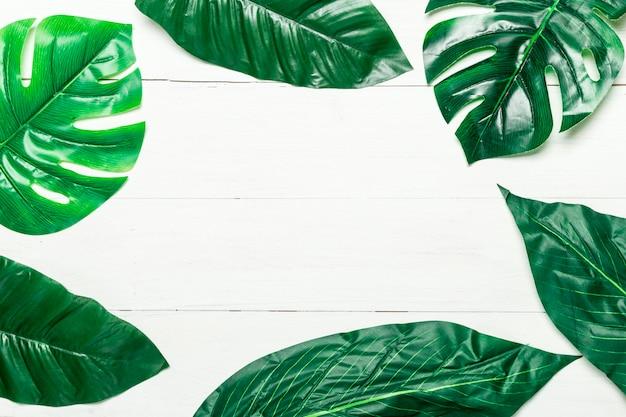 Feuilles vertes sur fond blanc Photo gratuit