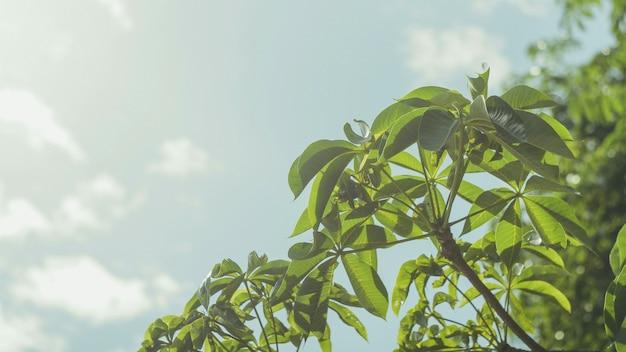 Feuilles vertes avec fond de ciel en lumière du jour Photo Premium