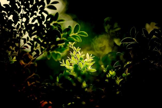 Feuilles vertes fond d'écran naturel, texture de la feuille, feuilles avec un espace pour le texte Photo Premium