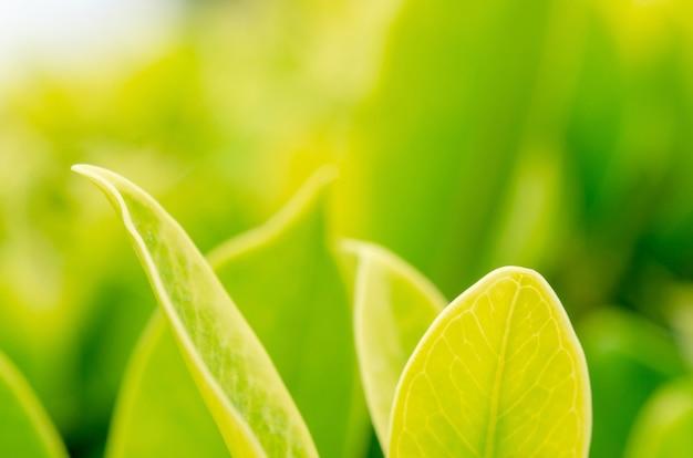 Feuilles vertes avec un fond flou Photo Premium