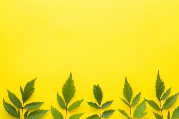 Feuilles vertes sur fond jaune. concept de l'été. Photo Premium