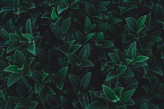Feuilles vertes de fond. lay plat. fond de ton vert foncé de nature Photo Premium