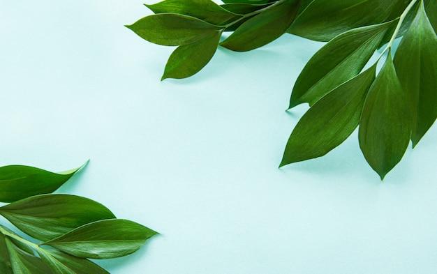 Feuilles vertes sur un fond de menthe Photo Premium