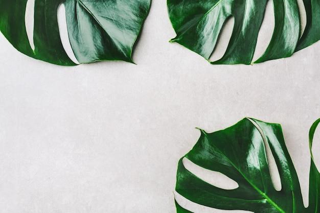 Feuilles vertes monstera sur gris Photo gratuit