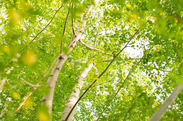 Feuilles vertes nature Photo Premium