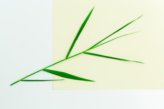 Feuilles vertes sur papier Photo Premium