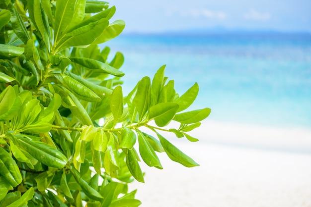 Feuilles vertes avec plage et mer est fond Photo Premium