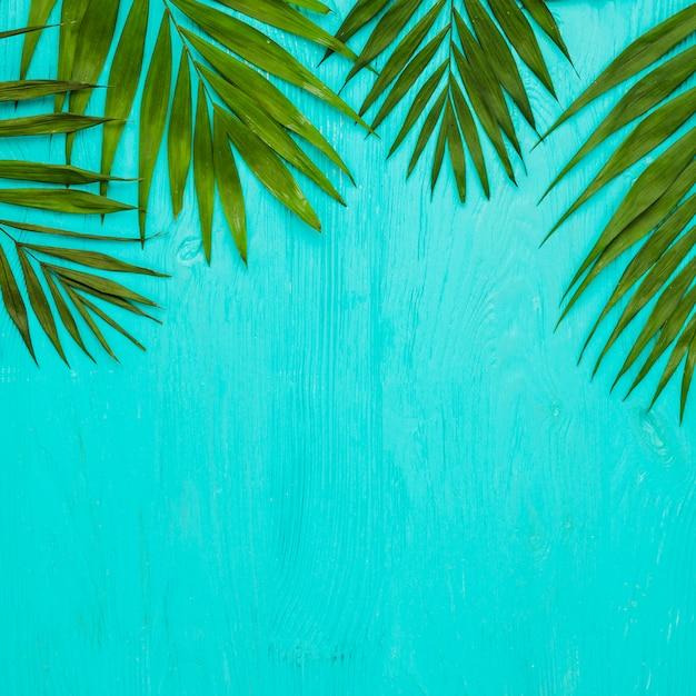 Feuilles vertes de plantes tropicales fraîches Photo gratuit