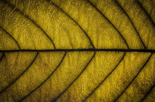 Feuilles Vertes Texture Et Fibre De Feuille Papier Peint Par Detail
