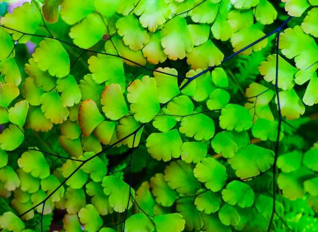 Feuilles vertes tropicales belles et colorées pour le fond Photo Premium