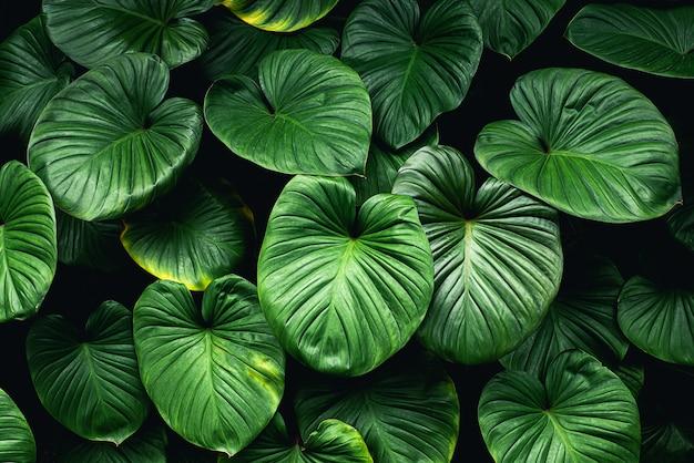 Feuilles vertes tropicales fond belle vue sur la nature Photo Premium