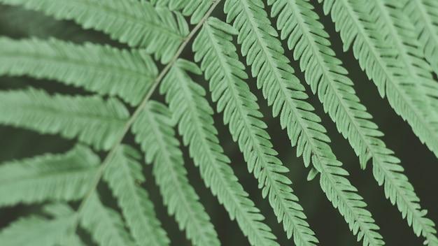 Les feuilles vertes tropicales. fond d'écran abstrait nature Photo Premium