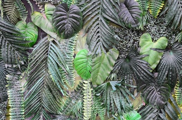 Feuilles vertes tropicales, fougère, palmier et feuille de monstera deliciosa sur le mur Photo Premium