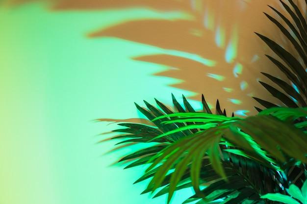 Feuilles vertes tropicales fraîches avec une ombre sur fond coloré Photo gratuit