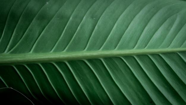 Les feuilles vertes Photo Premium