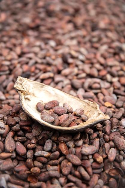 Fèves et gousses de cacao crues Photo Premium