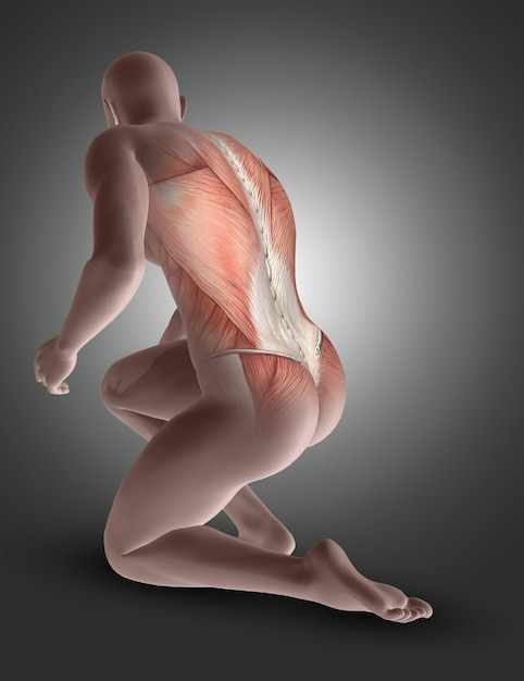 Figure masculine 3d agenouillée avec les muscles du dos mis en évidence Photo gratuit