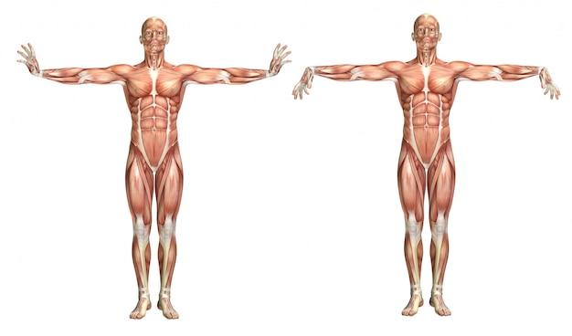 Figurine médicale 3d montrant l'extension et la flexion du poignet Photo gratuit