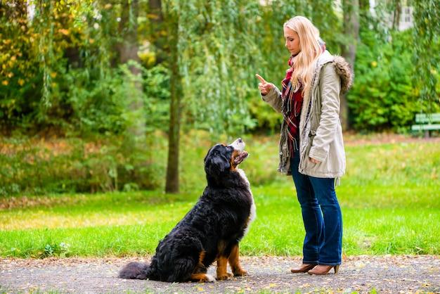 Fille en automne parc dressant son chien dans l'obéissance Photo Premium