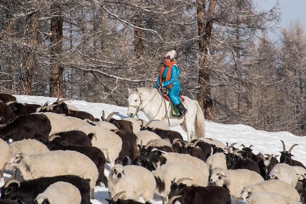 Fille Berger Assis Sur Un Cheval Et Un Troupeau De Moutons Dans La Prairie Avec Des Montagnes Enneigées Sur Fond Photo Premium