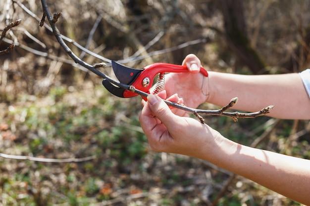 La fille coupe les branches du sécateur pomme rouge dans le jardin Photo Premium