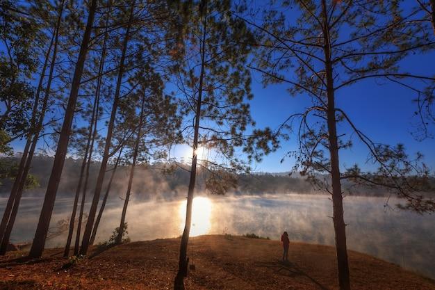 Fille ou femme voyant vue forêt de pins le matin à Photo Premium