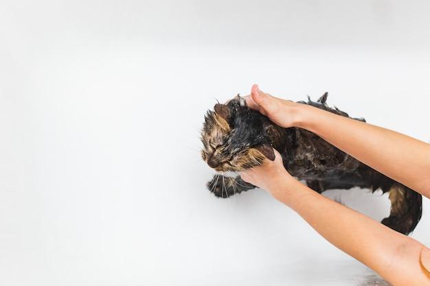 Fille lave un chat moelleux dans un bain blanc Photo Premium