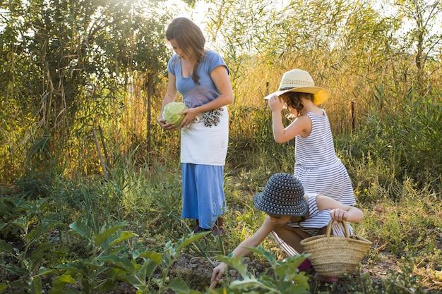 Fille et mère cueillant des légumes dans le champ Photo gratuit