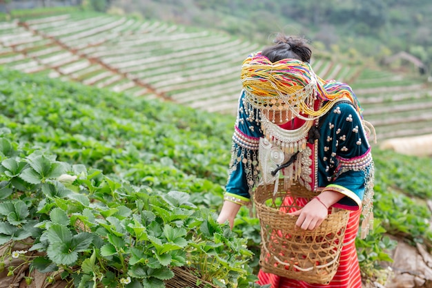 Des filles tribales ramassent des fraises Photo gratuit