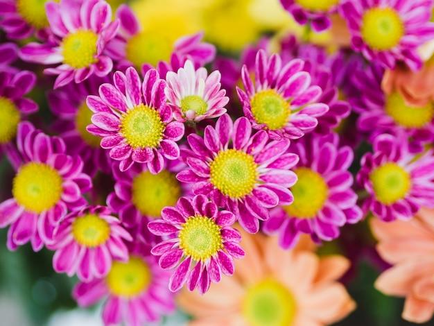 Fin, Haut, Pourpre, Fleurs Photo gratuit