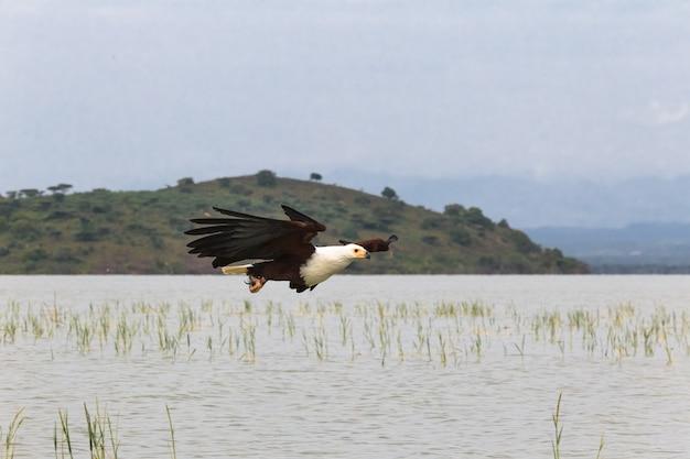 Fisher Sur Le Lac Eagle Baringo Lake Kenya Photo Premium