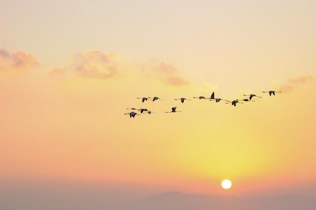 Flamants roses en vol oiseaux dans le ciel Photo Premium